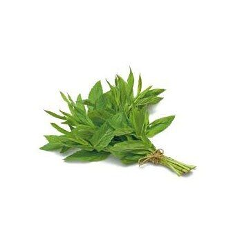 Fresh Mint by Egyptian Export Center - HB