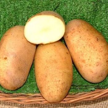 Fresh Lady Balfour Potatoes by AGROFOOD