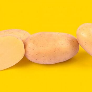 Fresh Lionheart Potatoes by AGROFOOD