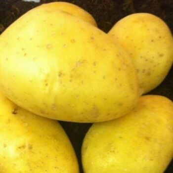Fresh Sissi Potatoes by AGROFOOD