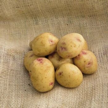 Fresh SorrentoPotatoes by AGROFOOD