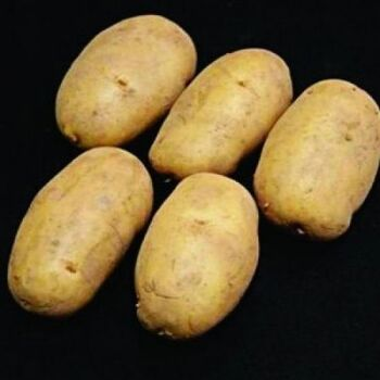 Fresh Valor Potatoes by AGROFOOD