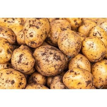 fresh Potatoes by Green Tiba