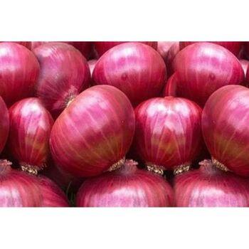 Fresh Red Onion by Gouda