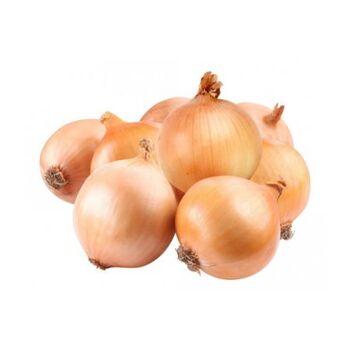 Fresh Golden Onion by Gouda