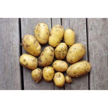 Fresh Organic potatoes by Daltex