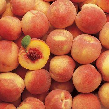Peach by EVAGRO