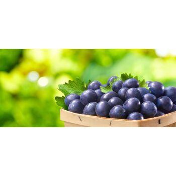 Fresh Black Grapes by Egypt Garden