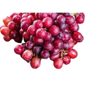 Fresh Red Seedless Grapes by Daltex