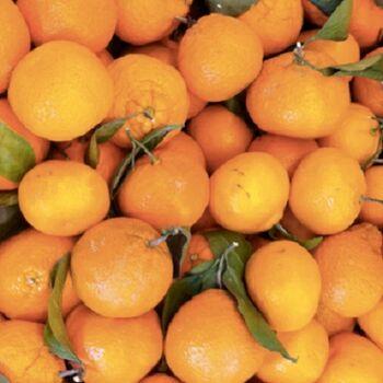 Fresh Mandarins by Egypt Garden
