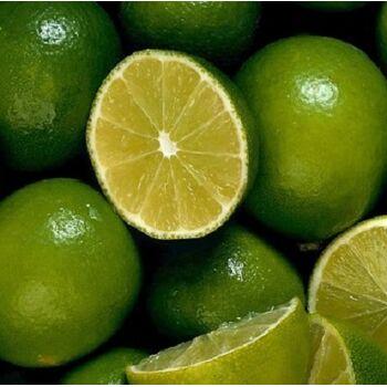 Fresh Lime by Egypt Garden