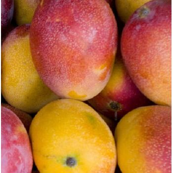 Fresh Mango by Egypt Garden
