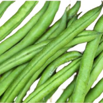 Fresh Green Beans by Green Tiba