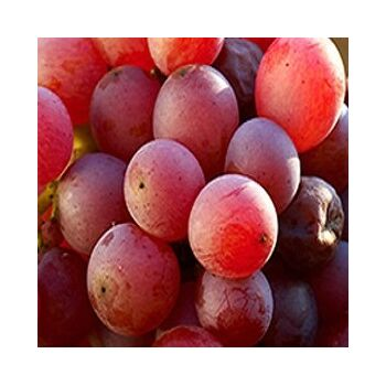 Flame Seedless Grapes by Egypt Garden