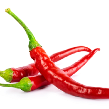 Fresh Hot Chilies by Egypt Garden
