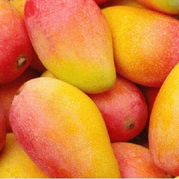 Fresh Mango by Gouda