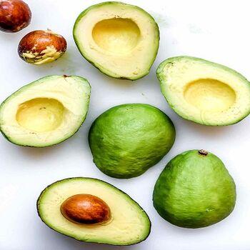 Avocado by EVAGRO
