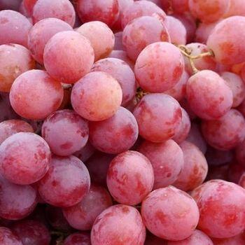 Fresh crimson red seedless grapes by Green Tiba