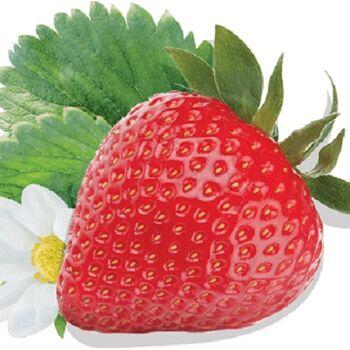 Fresh Strawberry by Dakahlia CO
