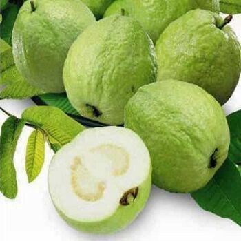 Guava by EVAGRO