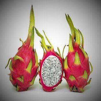 Dragon Fruit by EVAGRO