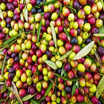 Olives by EVAGRO