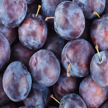 Plums by EVAGRO