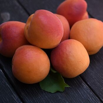 Apricot by EVAGRO