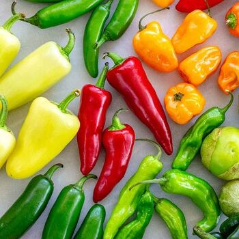 Chili Peppers by EVAGRO