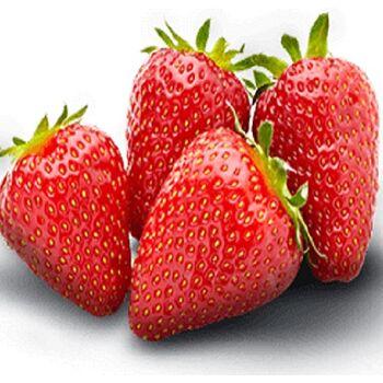 Fresh Strawberry by Snow Fresh Egypt