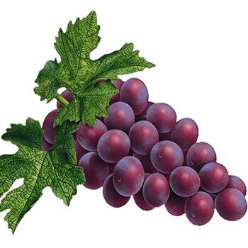 Fresh Grapes by Snow Fresh Egypt