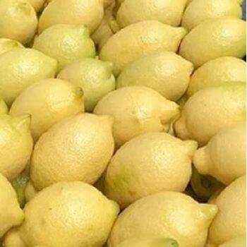 Fresh Adalia Lemon by Fruit Kingdom