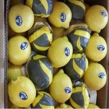 Fresh Baladi Lemon by Fruit Kingdom