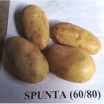 Fresh Potatoes by Fruit Kingdom
