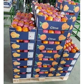 Fresh Valencia Orange by Fruit Kingdom