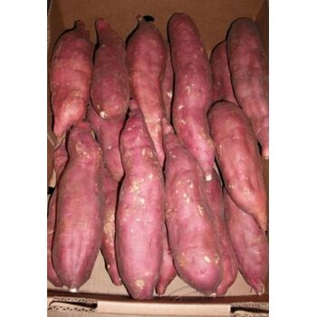 Fresh Sweet Potatoes by Fruit Kingdom