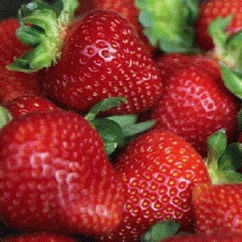 Fresh Strawberry by Fruit Kingdom