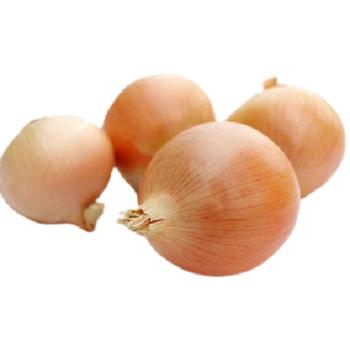 Fresh Yellow onions by Fruit Kingdom