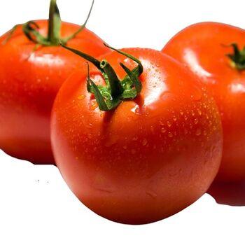 FreshTomatoes by Zamel