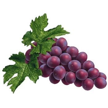 Fresh Grapes by Nour For Food