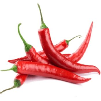 Fresh Hot Chili by Nour For Food