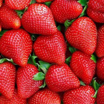 Fresh Strawberry by AGROVALLEY